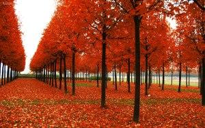 parc-en-automne